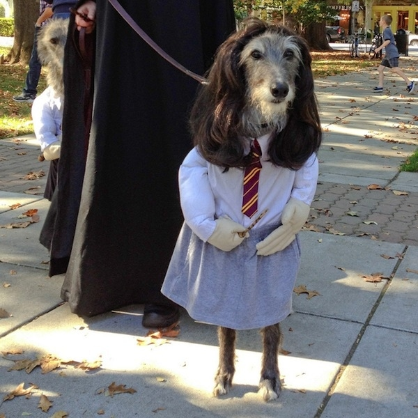 Cutest School Girl Ever. halloween-costumes-for-dog & These 27 Pets Are Totally Prepared For Halloween. Pretty Impressive ...