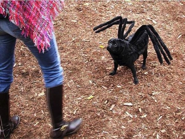 halloween-costumes-for-pets