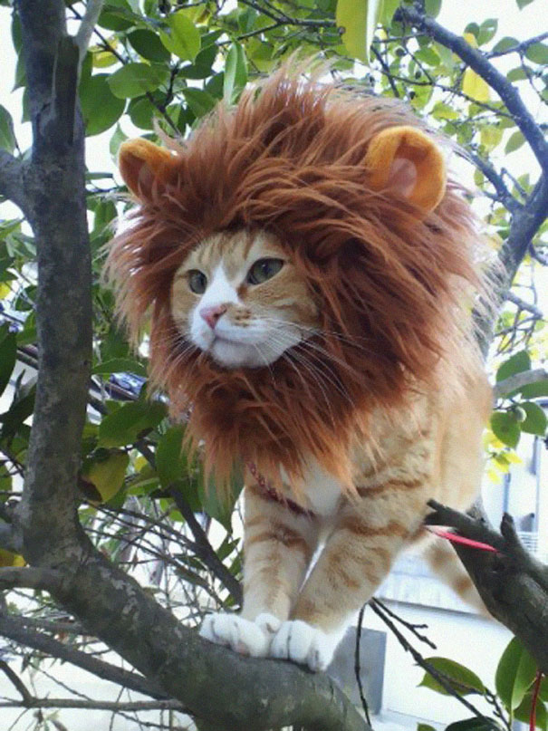 halloween-costumes-for-pets-11