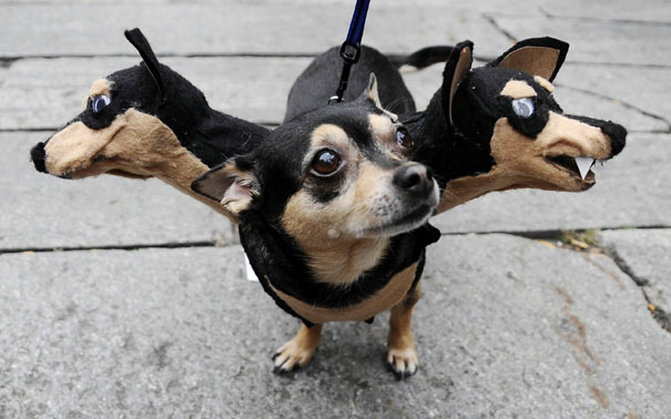 halloween-costumes-for-pets-12