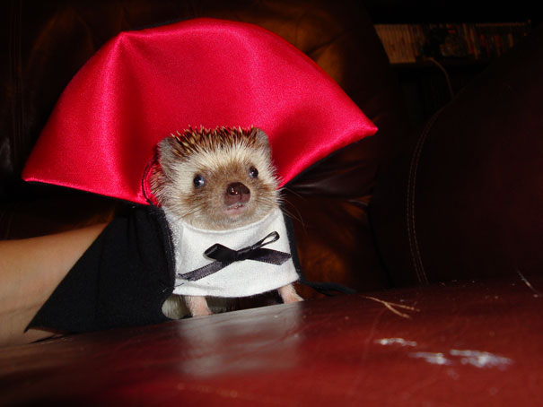 halloween-costumes-for-pets-13