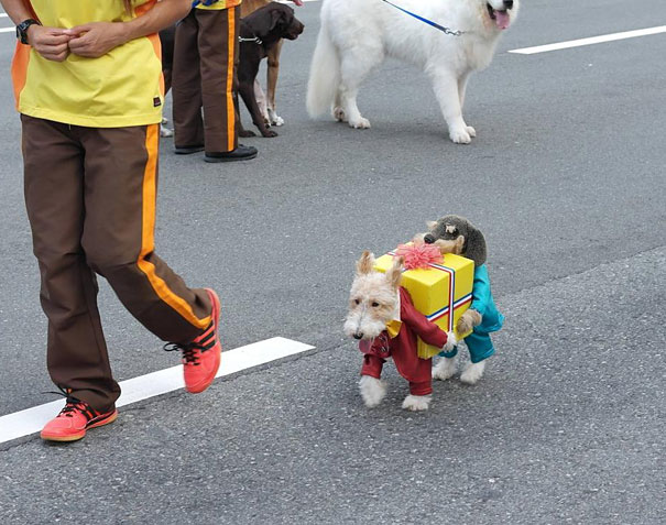 halloween-costumes-for-pets-15