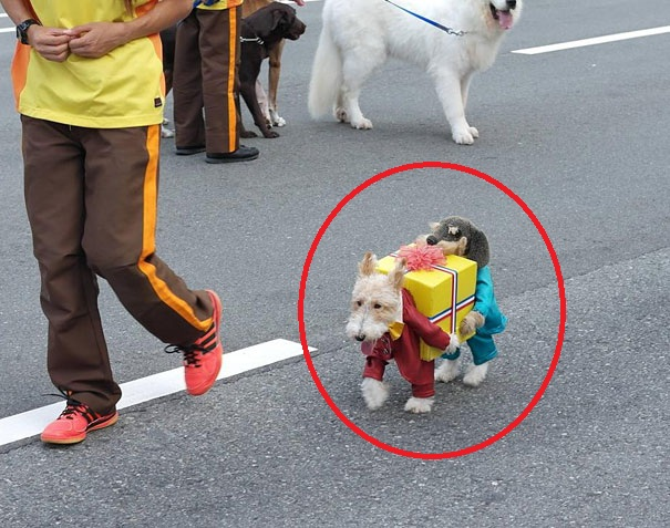These 27 Pets Are Totally Prepared For Halloween. Pretty Impressive.