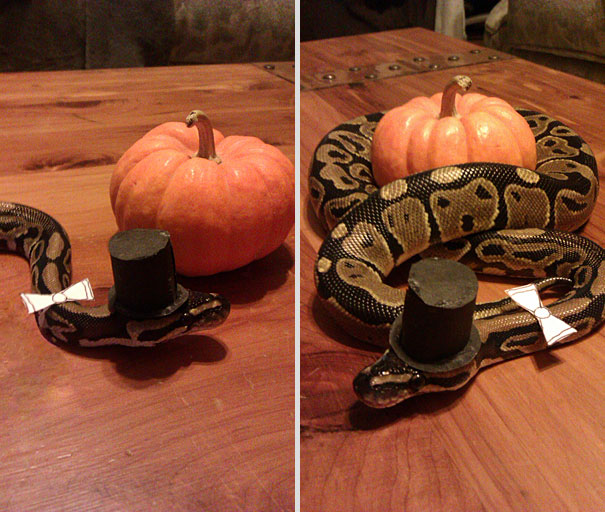 halloween-costumes-for-pets-17