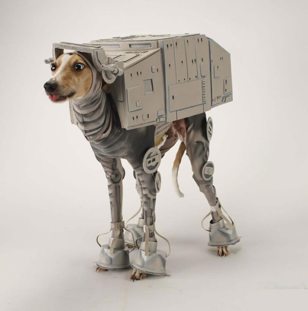 halloween-costumes-for-pets-19