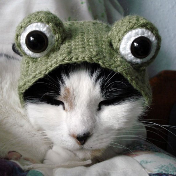 halloween-costumes-for-pets-20