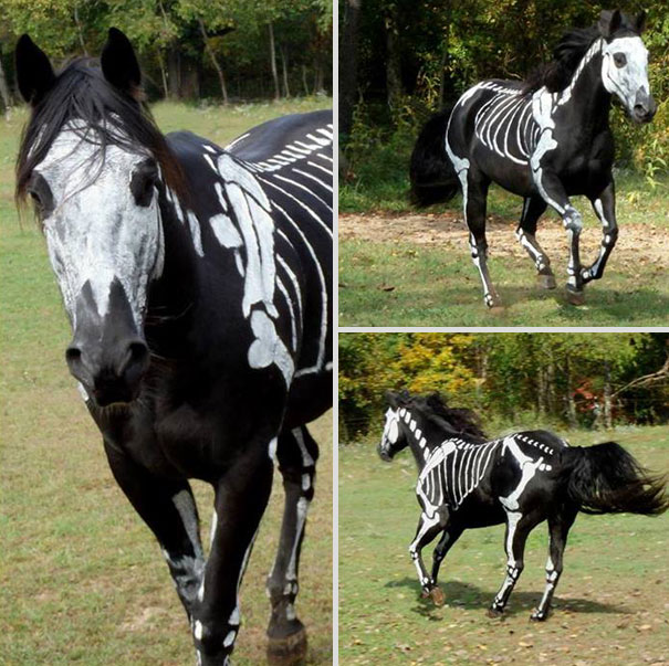 halloween-costumes-for-pets-21-4