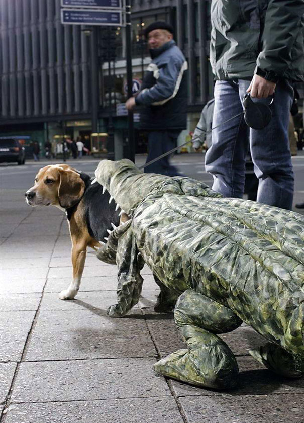 halloween-costumes-for-pets-23