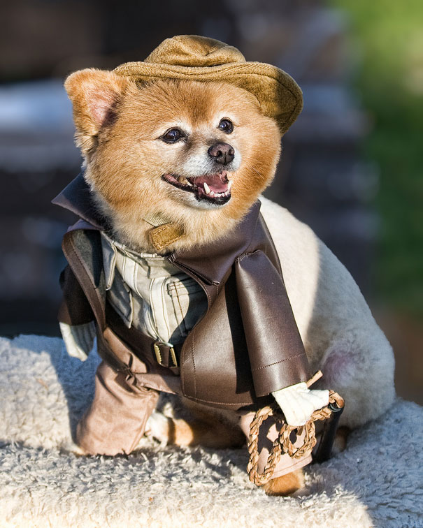 halloween-costumes-for-pets-24