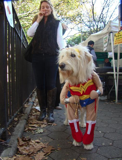 halloween-costumes-for-pets121