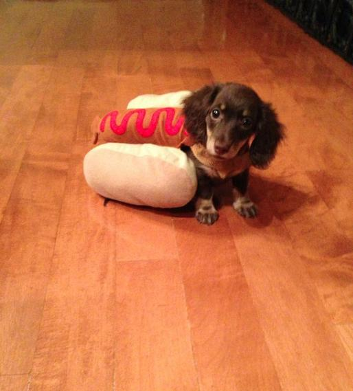 halloween-costumes-for-pets676