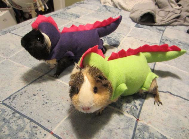 halloween-costumes-for-pets8989