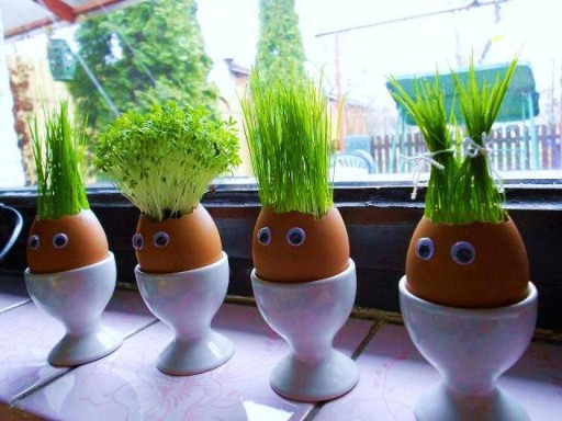 How To Make Eggshell Planters DIY planters