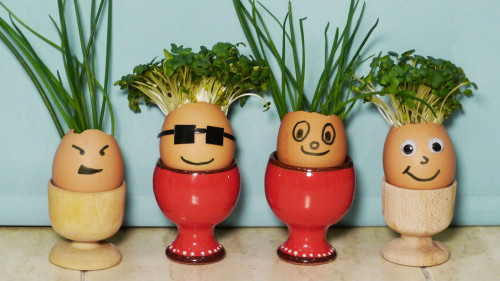 How To Make Eggshell Planters DIY