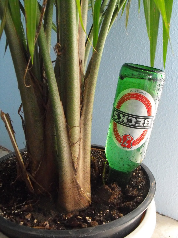 9 Unique Ways to Reuse Empty Beer Bottles. Try These Fun DIY Projects