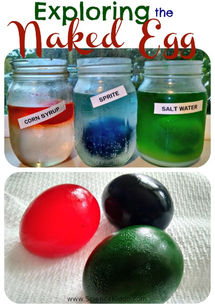 Diy Naked Egg Experiment Fun Science Experiments For