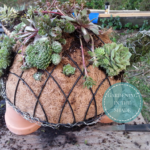 How to Make A Succulent : DIY Garden Ideas