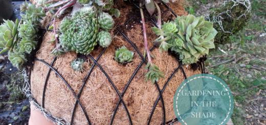 How to Make A Succulent diy garden ideas