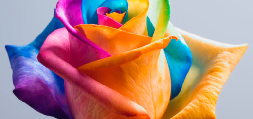 diy science experiments for kids rainbow roses home decor