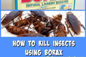 Top 17 Money Saving Household Borax Uses and Hacks