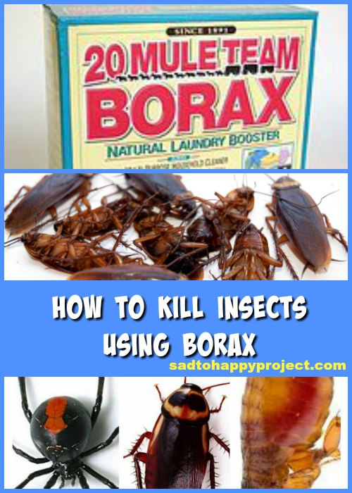 borax uses to kill ants pests