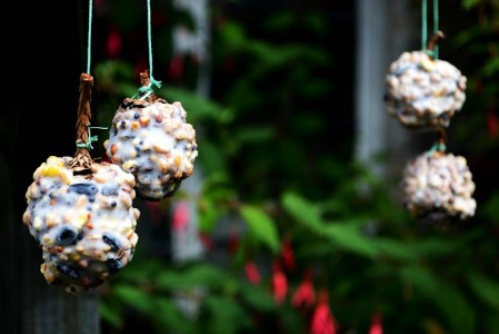 diy bird feeder 2